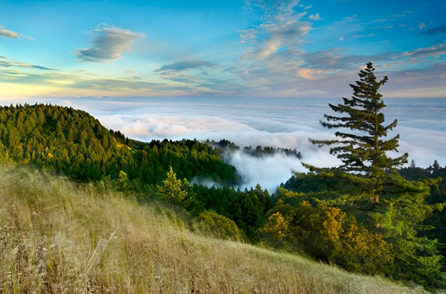 Tamalpais Redwoods, Marin County, California
