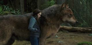 wolf-wolf