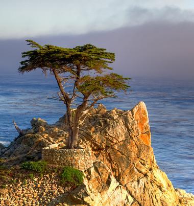 cypresstre