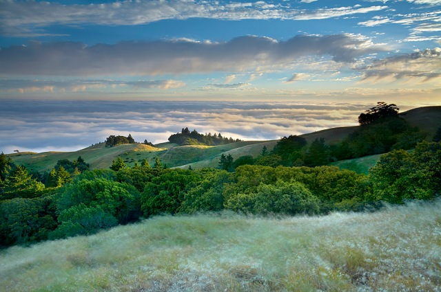Tamalpais Breeze - Marin County, California